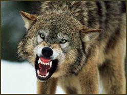 wolf attack 2