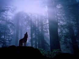wolfhowlingalone