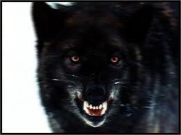 blackwolfsnarling